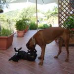 pet friendly villa denise