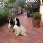 Vacanze con Animali Toscana Mare - Villa Denise