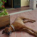 Vacanza Pet Friendly Toscana Mare - Villa Denise