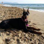 Vacanze Animali Costa degli Etruschi - Villa Denise