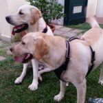 Pet Friendly Casa Vacanze Suvereto - Villa Denise